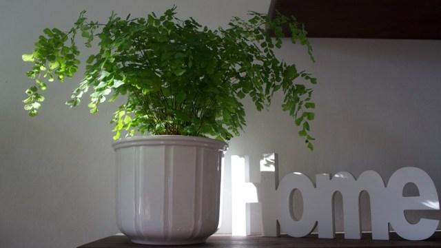 Plantas que puedeas comprar para tu casa en el home office (Imagen: pixabay)