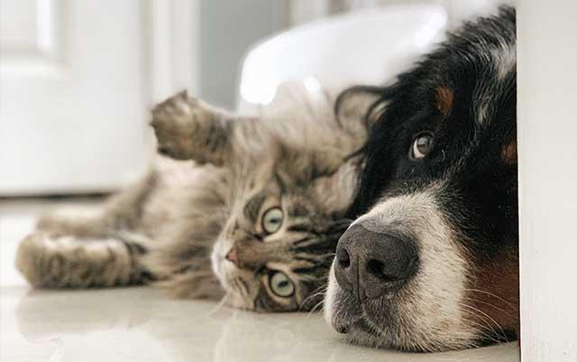 Seguro para gatos y perros