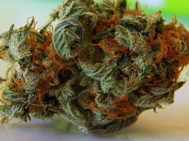 La industria de la cannabis va creciendo poco a poco