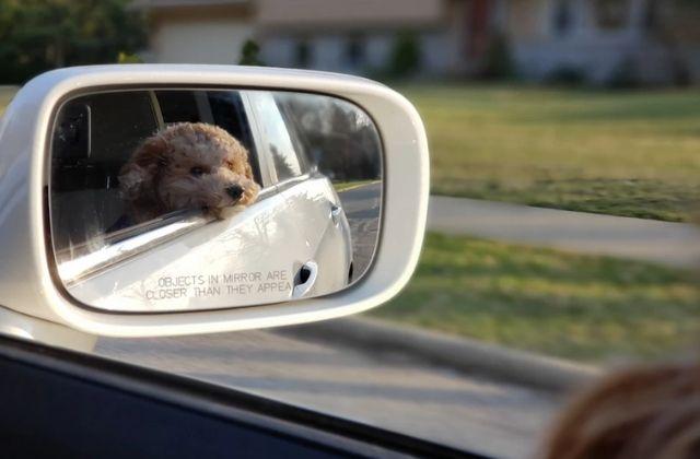 Evita multas por llevar a tu perro