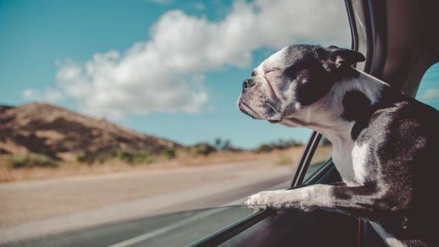 Viajar perros en autos