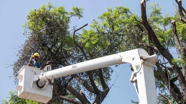 Multa por derribar árbol