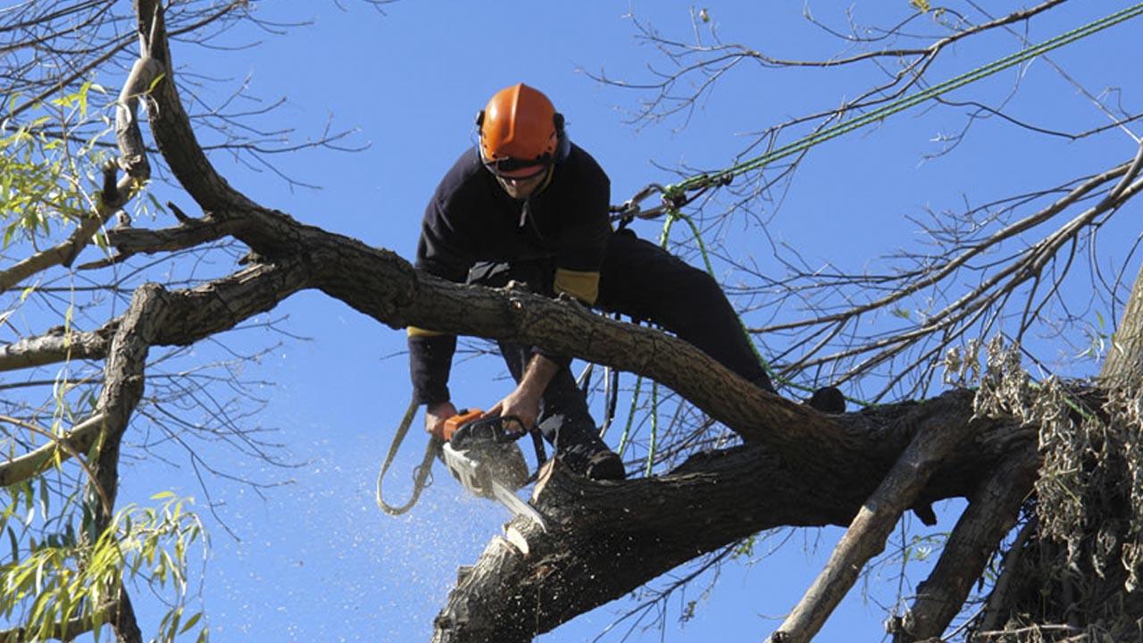 Derribar árbol en CDMX