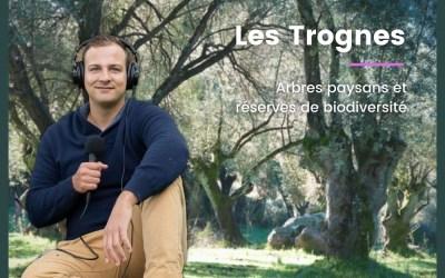 Les Trognes, arbres paysans et réserves de biodiversité