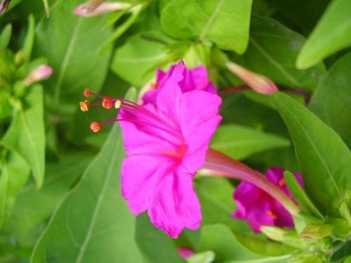 7月28日の誕生花の意味|お祝い品.com