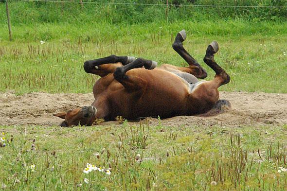 Med laglig fildelning blir man en glad hest.