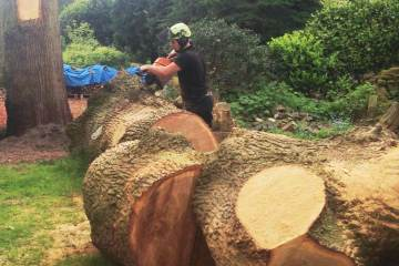 Tree felling and chainsaw tree services in Cheshire