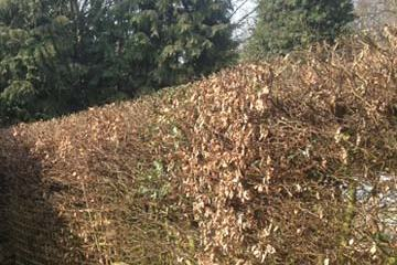 Hedge Trimming Northwich Cheshire
