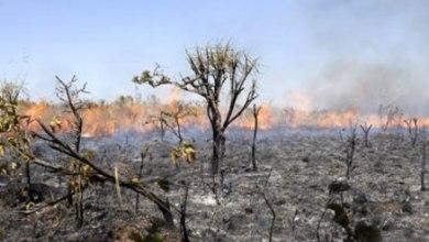 Photo of Já foram registrados 586 focos em todo o Ceará; 45 só no último domingo (15)