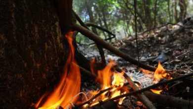 Photo of Suspensas autorizações para uso de fogo controlado no Ceará