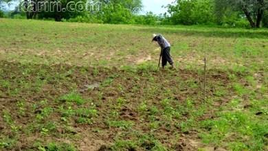 Agricultor Em Milagres-CE