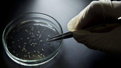 Foto de OMS pede prudência sobre a relação entre o zika e a síndrome Guillain-Barré