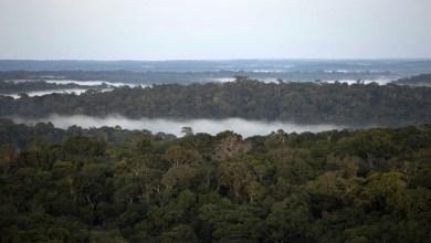 Foto de Queimadas: Polícia do Pará identifica suspeitos de provocar incêndios na Amazônia