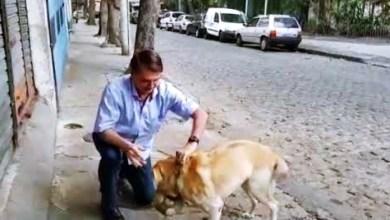 Photo of Bolsonaro anuncia criação da Secretaria dos Animais