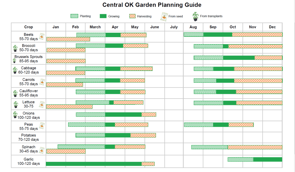 What To Plant Now Seeds Vs Plants Spacing And More Okc Beautiful
