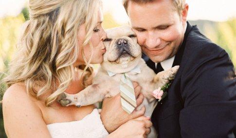 perro novio pareja amas a tu perro más que nadie