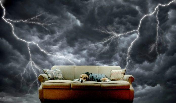 Perro beagle en un sillón mientras está una tormenta