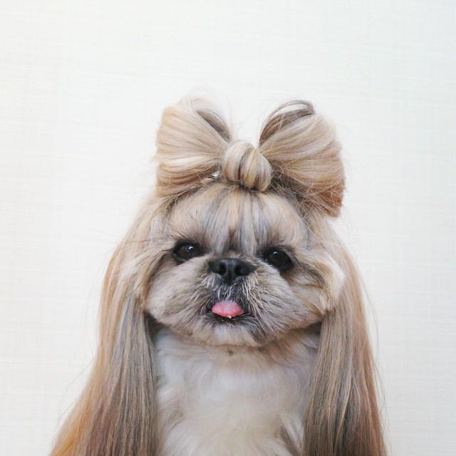 La Perra Ms Famosa Y Con Mejores Peinados De Instagram