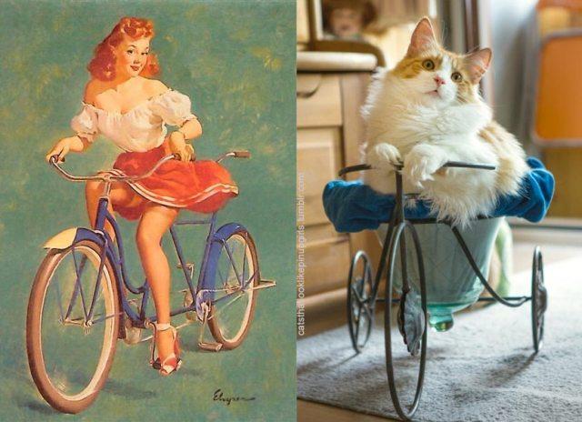 gato como chica pin-up en bicicleta