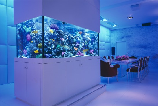Saltwater Reef Aquarium Berlin Loft Germany