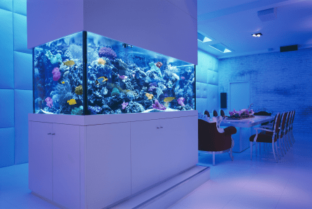 Berlin Germany Loft / Walk around Reef Aquarium