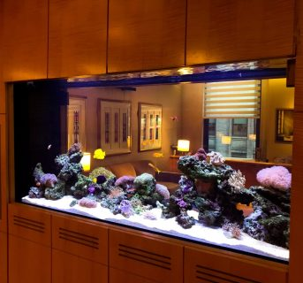 Double Sided Coral Reef Aquarium
