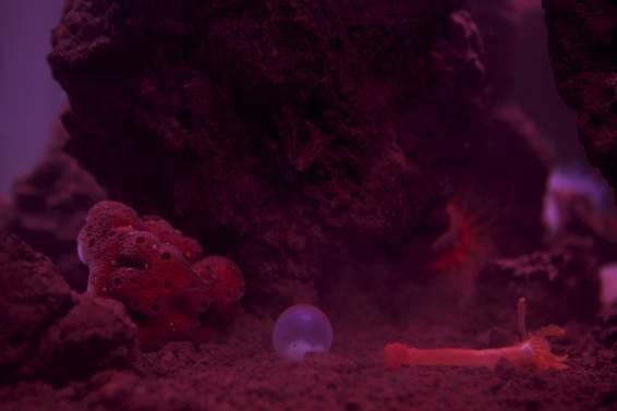 giant custom aquariums