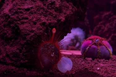 large custom aquariums