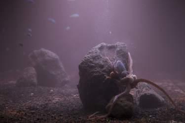 huge custom aquariums