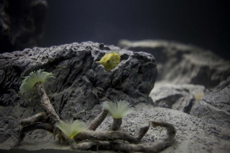 high end custom aquariums