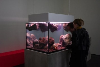 custom aquarium art exhibit New York