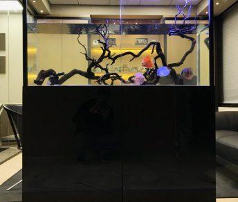 Freshwater Discus Open Top Office Aquarium