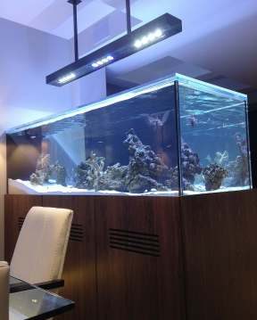 Central Park West Saltwater Aquarium