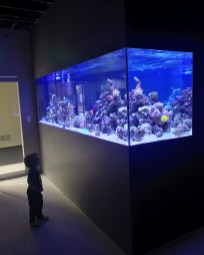 900 Gallon Reef Aquarium