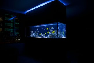 Columbus Circle Saltwater Fish Aquarium