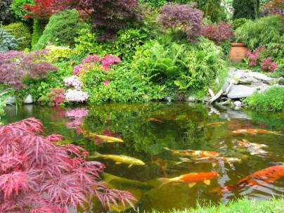 Outdoor Japanese Koi Pond