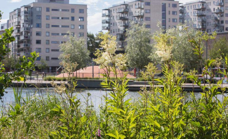 Konferanse: Hovinbyen in the Making