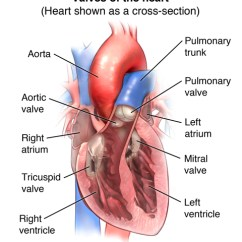 Diagram Of A Heart Bypass Graft Leg Arteries And Veins The Valve Institute At Oklahoma Hospital