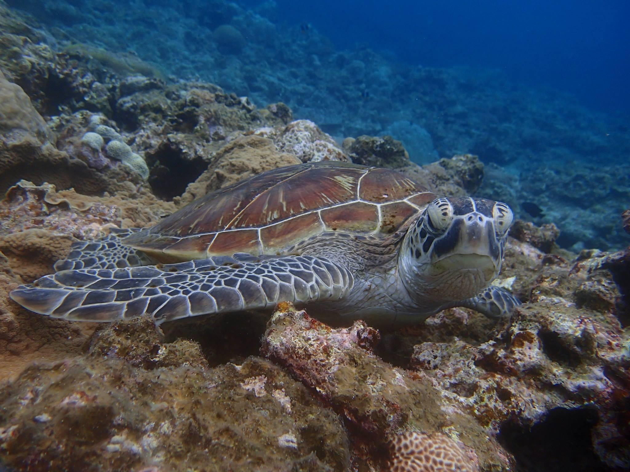 有証潛水 – 石垣潛水