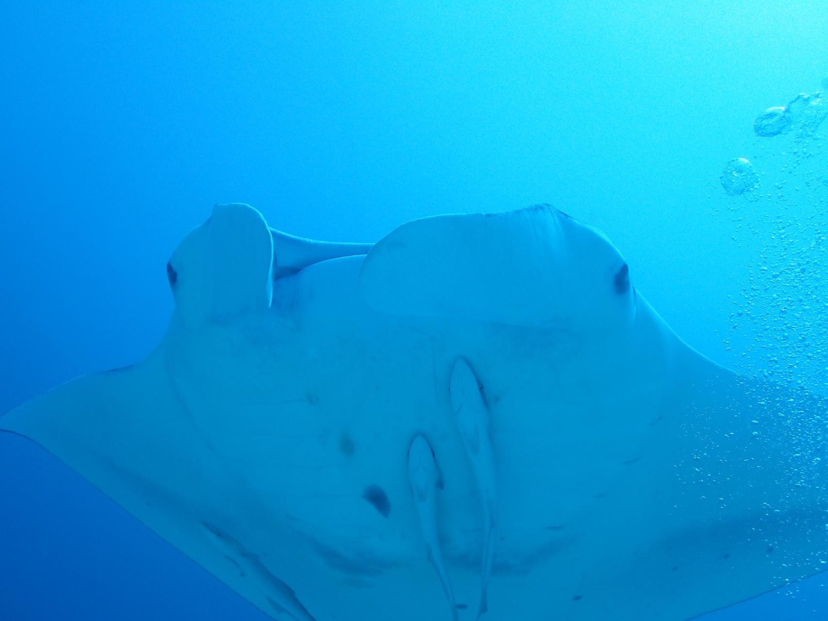 石垣潛水是一家香港人創辦的潛店