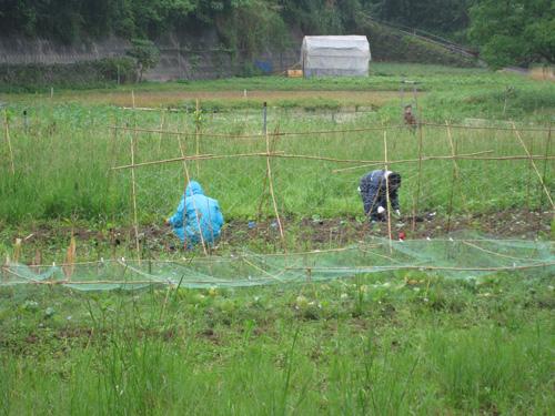 雨の日でも畑仕事をがんばる2人