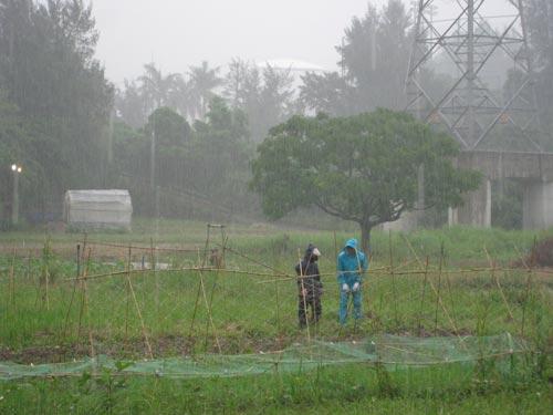 雨の日が続きます