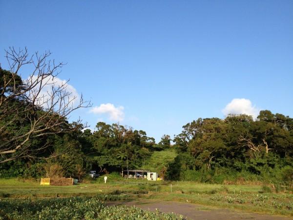 沖縄週末農業