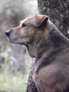 Profile of Brown Dog