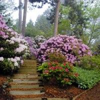 Kisla tla - veselje za kisloljubne rastline