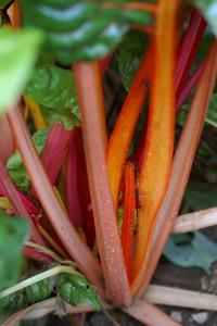 Blitva - okusni vrt