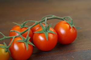 Sajenje in vzgoja paradižnika – od grede do loncev