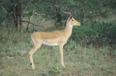 RSA 031 Kruger parc