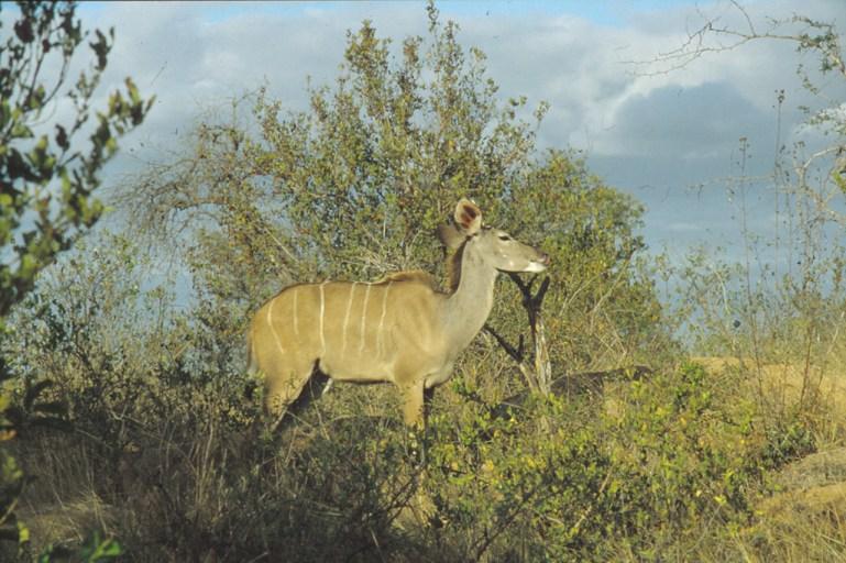 RSA 039 Kruger parc