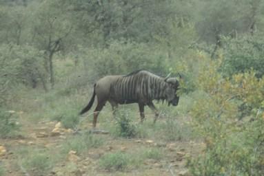 RSA 044 Kruger parc
